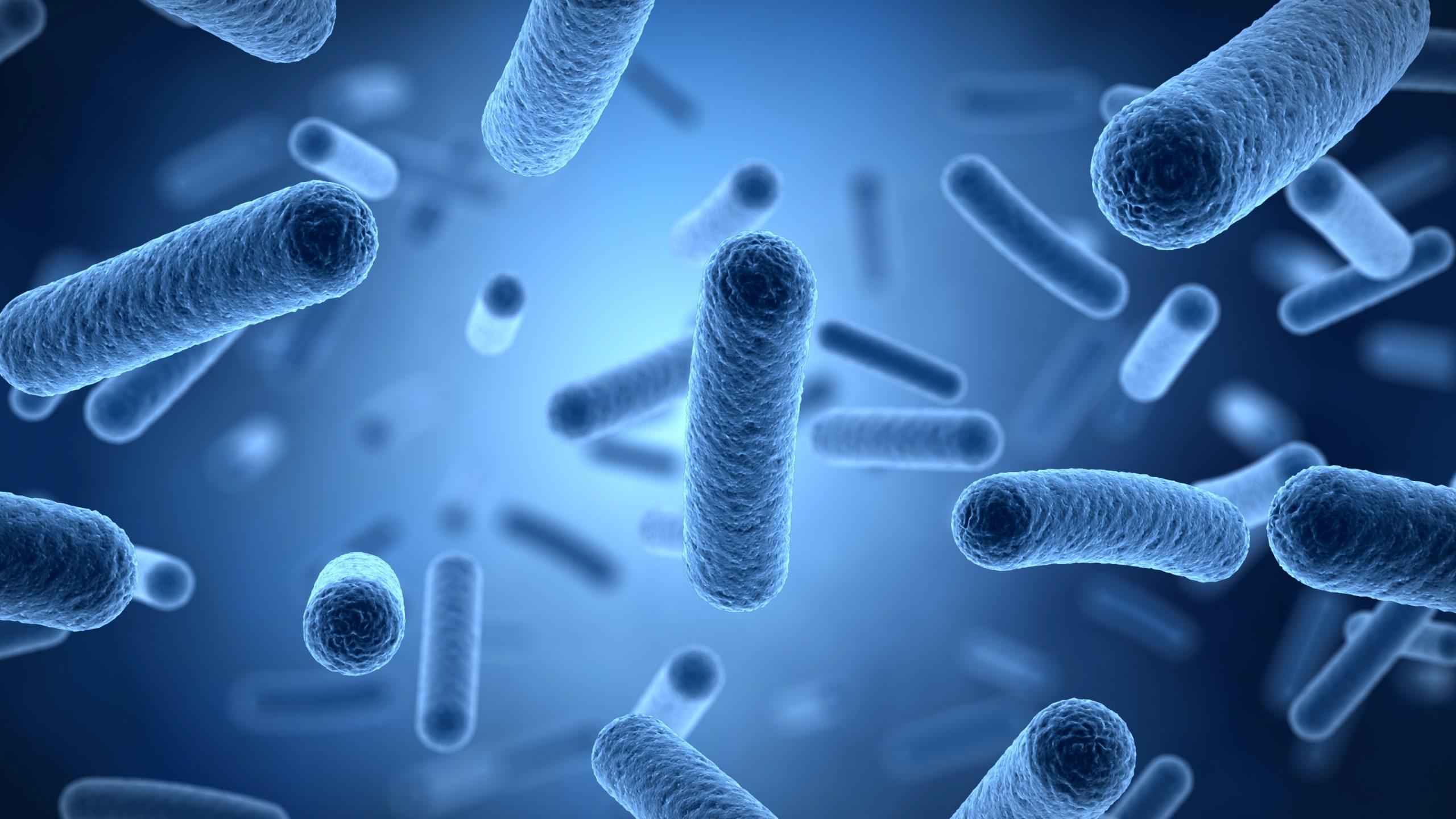 bacteria slider